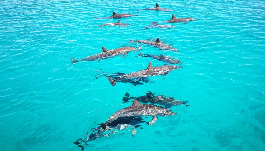 mar-rosso-parco-nazionale-wadi-el-gemal-delfini