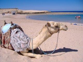 Sharm el Sheikh guida